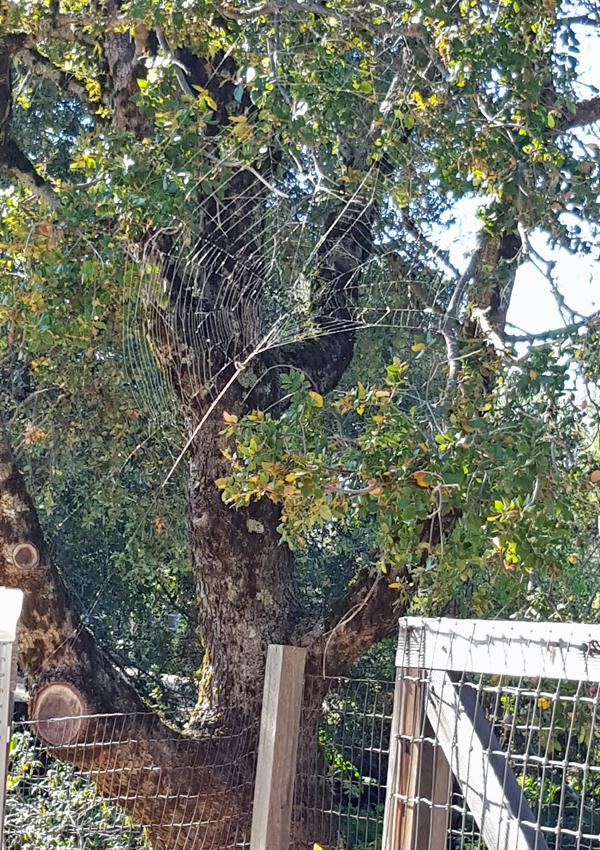 spider web rebuilt