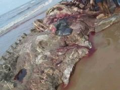 RIVERS: Residents feast on strange mammal washed ashore