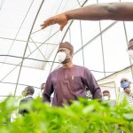 Oyo Govt, UI partner with herbal practitioners to find coronavirus cure