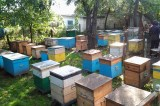 Modern Beekeeping Offers Ethiopian Youth a Sweeter Future