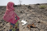 Ethiopia Increases Emergency Drought Appeal As Hunger Spreads.
