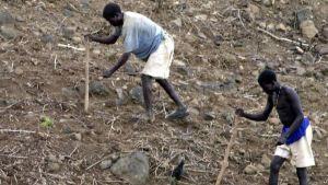 drought in ethiopia 2