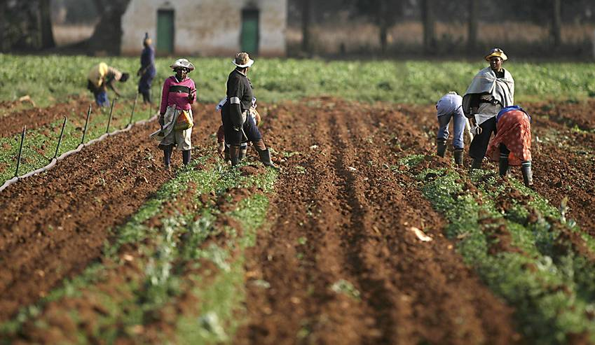 Farmworkers are seen at a farm in Eikeihof outside Johannesburg September 30, 2008. REUTERS/Siphiwe Sibeko