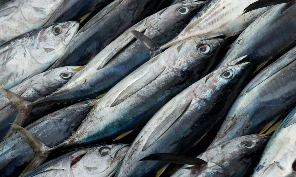 More than 40% of popular species such as tuna are being caught unsustainably, UN FAO says. Photograph: Alamy