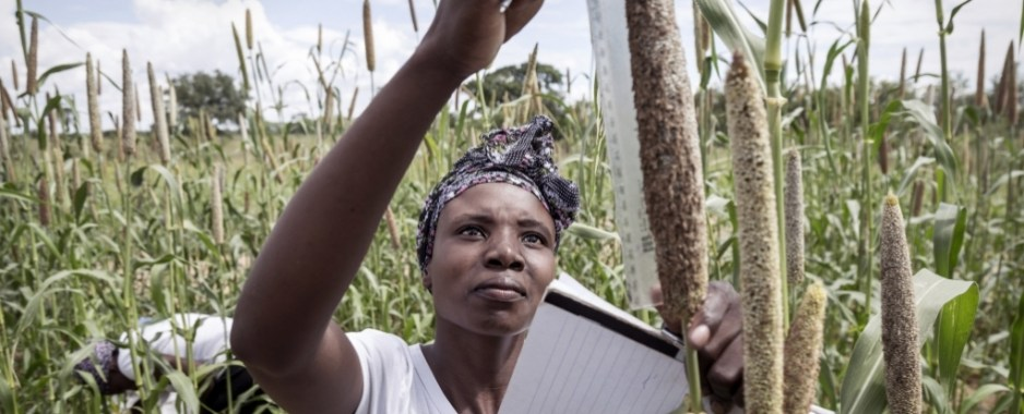 Invest In Food  Security And Rural Development
