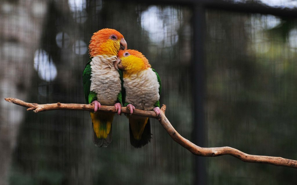 Dating Parrots