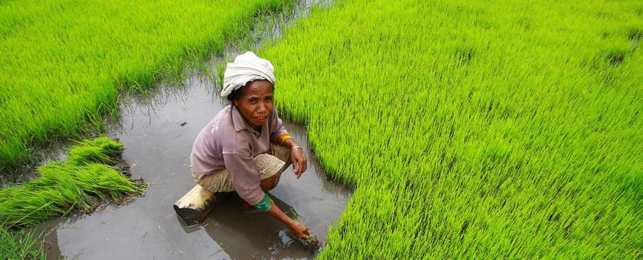 UN Women To Train Rural Females In Horticulture