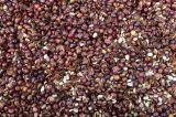 Coffee Dealers Build Capacities In Cameroon