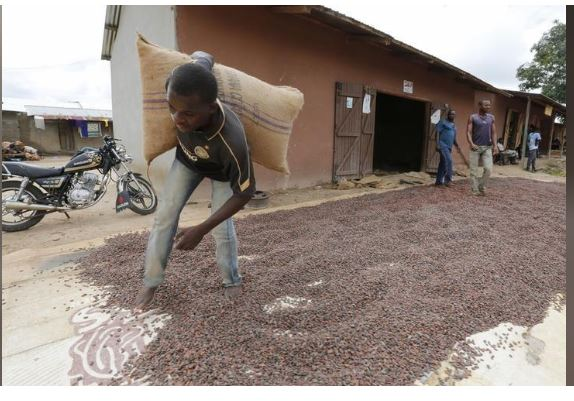A man carries a cocoa bag while walking over cocoa beans left out to dry in Niable, at the border between Ivory Coast and Ghana, June 19, 2014. REUTERS/Thierry Gouegnon