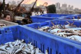 International Day for the Fight against Illegal, Unreported and Unregulated Fishing