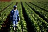 Southern African Development Community Face Food Shortage