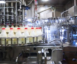 Milk Production Drops By 6 Percent Due To Pesistant Drought In Namibia