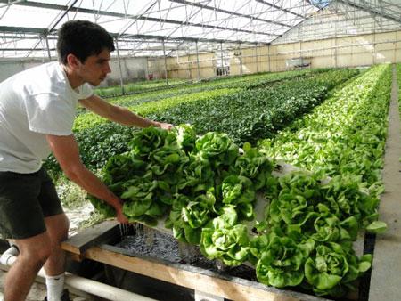 Indoor_Agriculture
