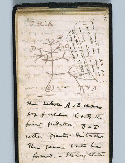 The first-known sketch by Charles Darwin of an evolutionary tree describing the relationships among groups of organisms.