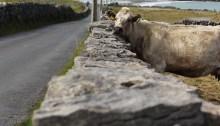 Photoessay: Animals of the Aran Islands