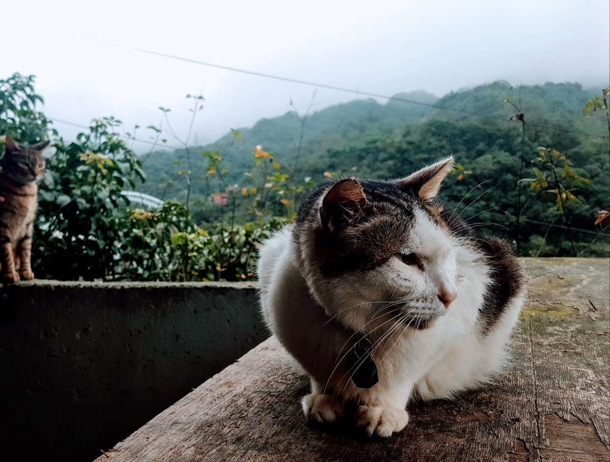 The Best Day Of My Life: Houtong Cat Village