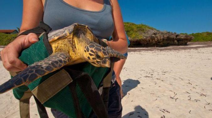 turtles - abroadship.org