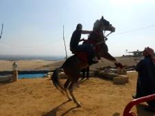 Shafei posing for photos on the beautiful Arabian horse.