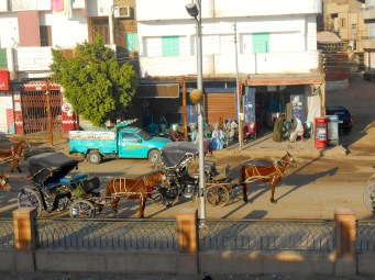 The combination of bells and jingles on the buggies and horses, plus their iron-shod hooves on the pavement makes for quite some noise.
