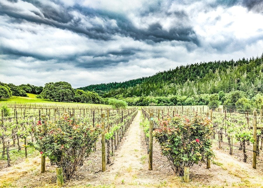 best time to visit Napa Valley