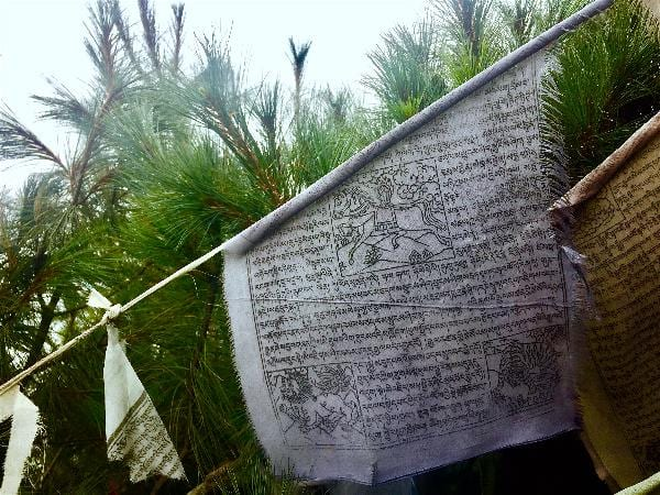 Prayer flags with holy text string between the brush on a rest day hike to the Everest View Hotel