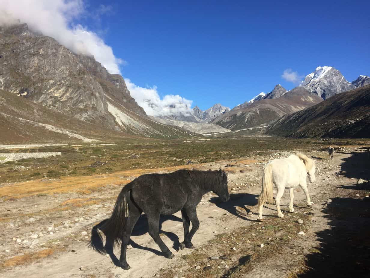 On the way to Everest, trekking next to free horses with mountains towering on both sides is a morning highlight better than coffee