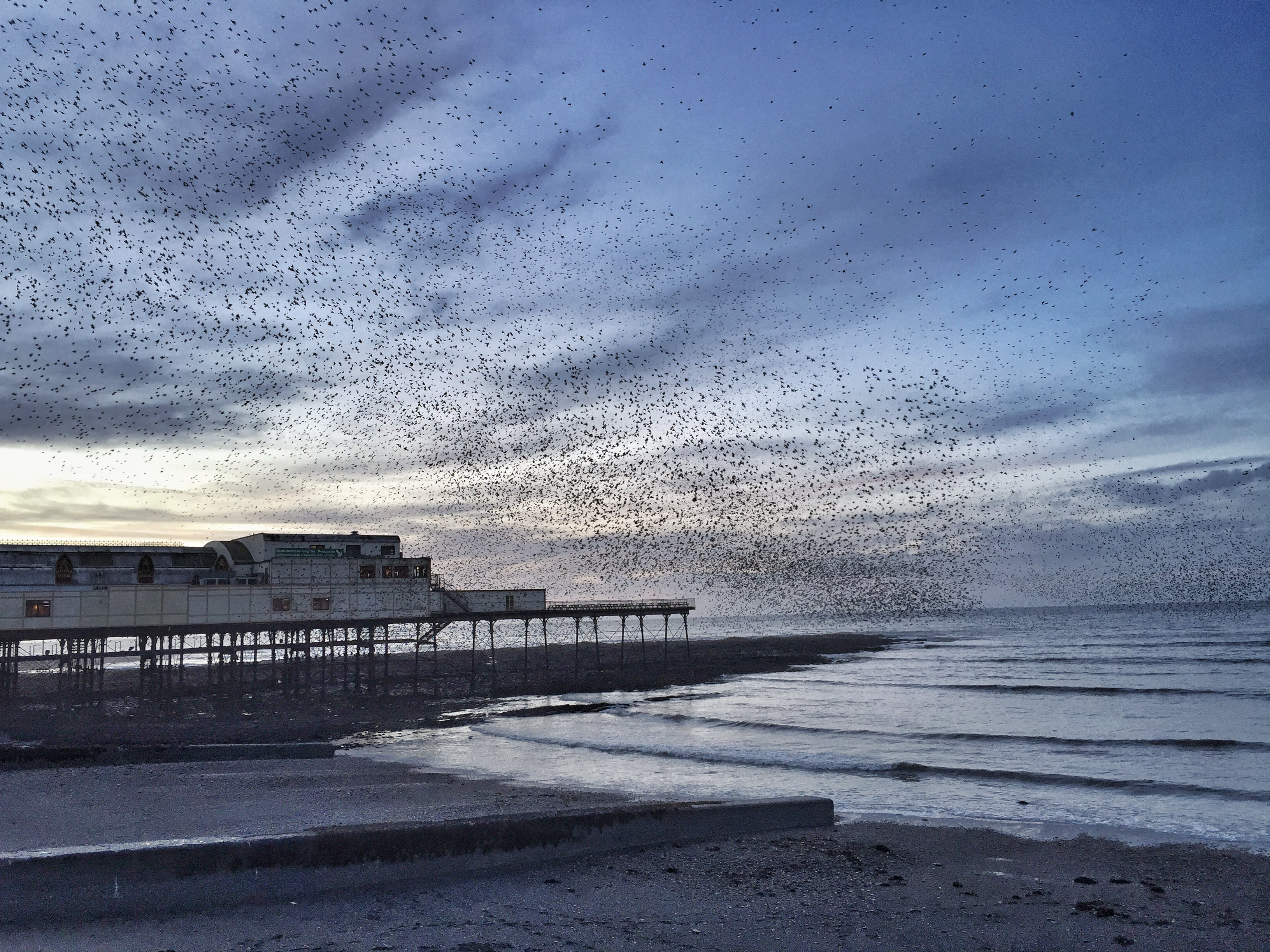Starling Murmuration at Aberyswyth Grand Pier