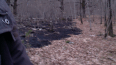 Waldbrand Mesocco, Schweiz,  burnt forest floor, trees intact