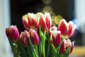 flower-bouquet-tulips-flower-bouquet-floral-spring