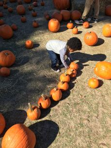 Putting the pumpkins in order
