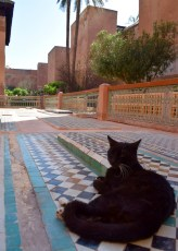 We found a cat in the Saadian tombs, where Moroccan royalty were once buried.