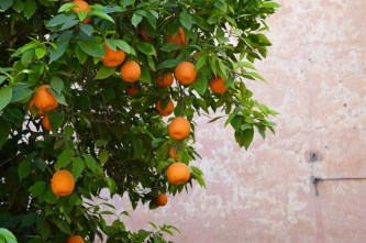 Orange trees were everywhere in Marrakech, which meant fresh squeezed orange juice was readily available (and served to us every morning with breakfast at our riad).