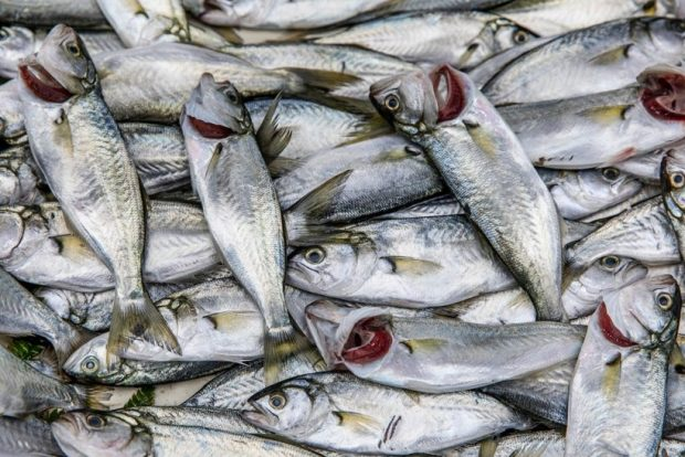 Sale of bycatch tuna permitted under new rules