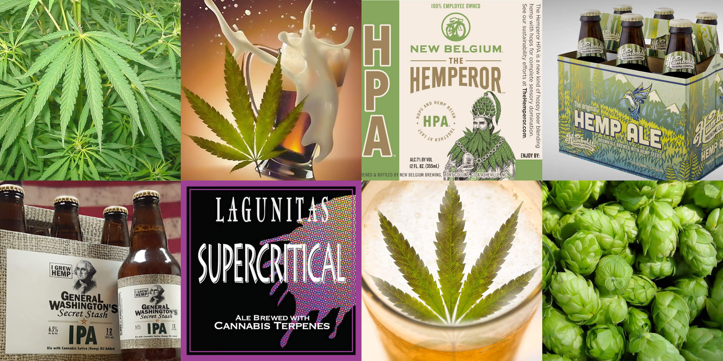 The latest trend in craft brewing that the industry has been high on is the proliferation of cannabis-infused beers.