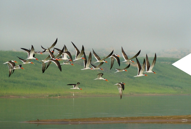 Ethiopia Tours - Paradise of Birds