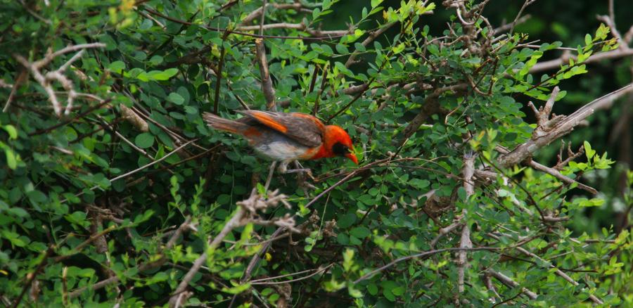 15 Days Birding Tour