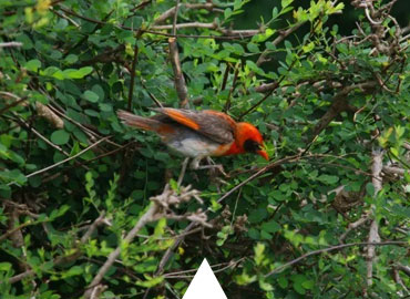 16 Days Birding Tour with Ankober and Gibe Gorge