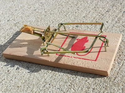 An image of a mousetrap set up to catch rodents