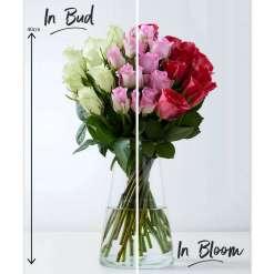 Spring Rose Abundance Bouquet, White, Pink & Red