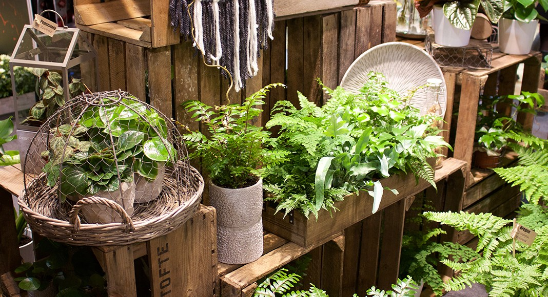 A Green House: Tips for Growing and Maintaining Ferns in Your Home
