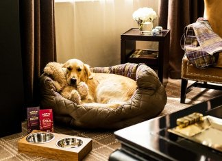 5 of the Best Dog Friendly Holiday and Escapes in the UK and Abroad