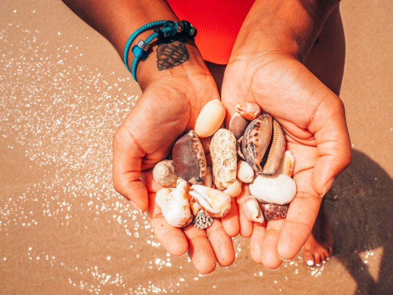 Seashells collected on the beach