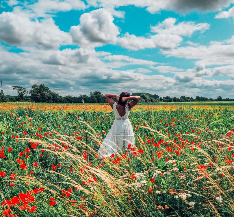 Absolutely Lucy poppy field, flexible working
