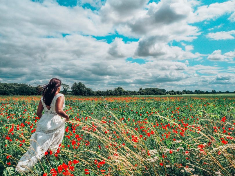 Absolutely Lucy in poppy field, Norfolk