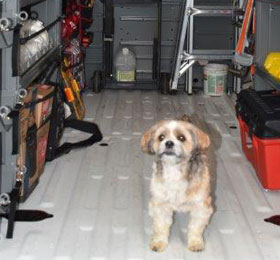 Our mascot, Ollie, checking out new van--Absolute Precision Plumbing Heating & Cooling