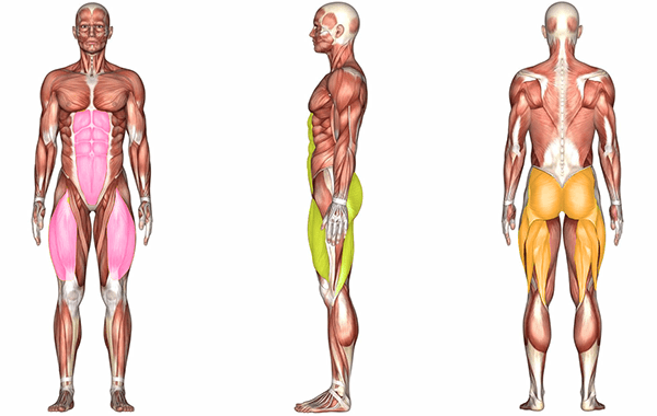 Muscles worked doing compound squat exercise