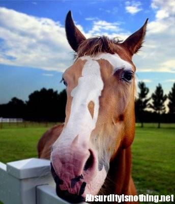 Illusione Cavallo