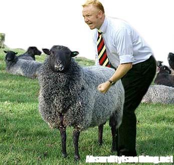 Abusò di una pecora, assolto perché la pecora non può testimoniare