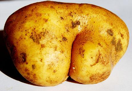 potatointheass1