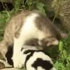 Gatto partorisce cane